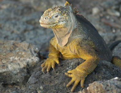 lizard-2113966_1280